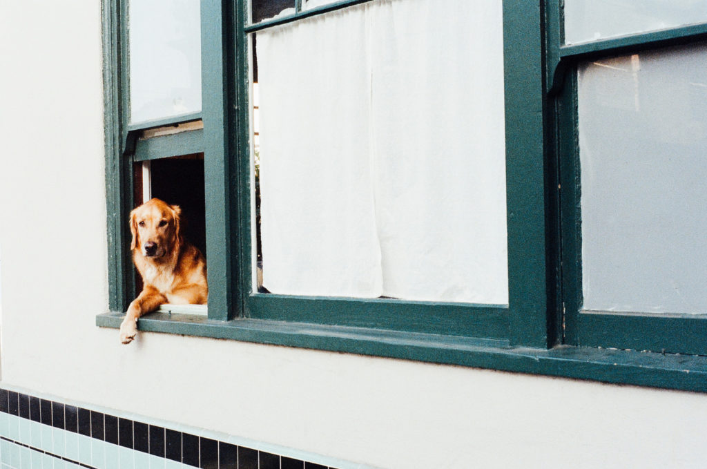 CARING FOR YOUR PET DURING LOCKDOWN