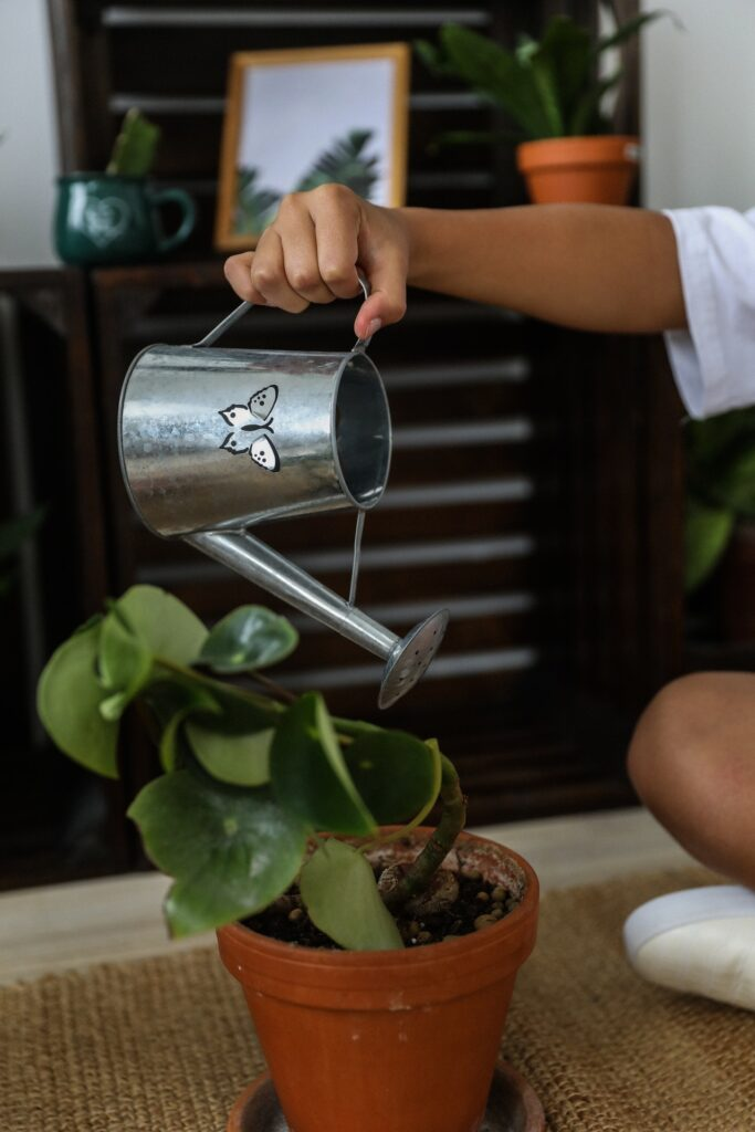 THE IDEAL GUIDE TO INDOOR PLANT CARE